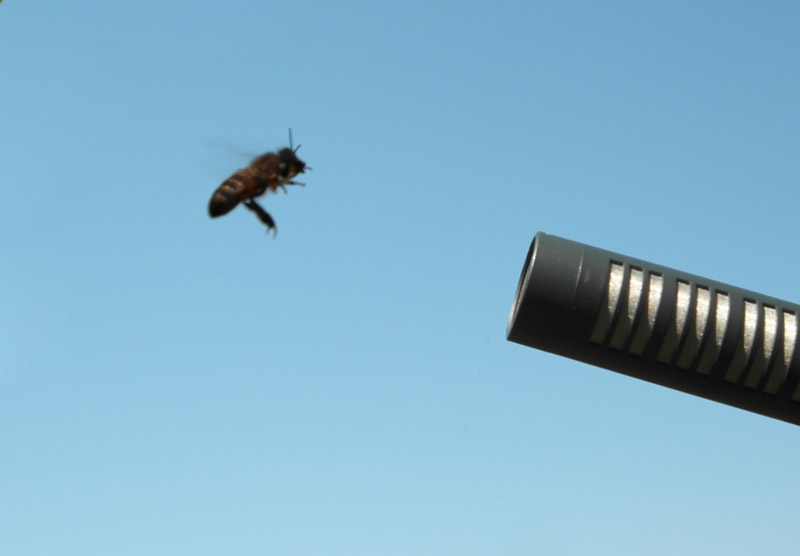 sound design essaim abeilles pour jeu vidéo