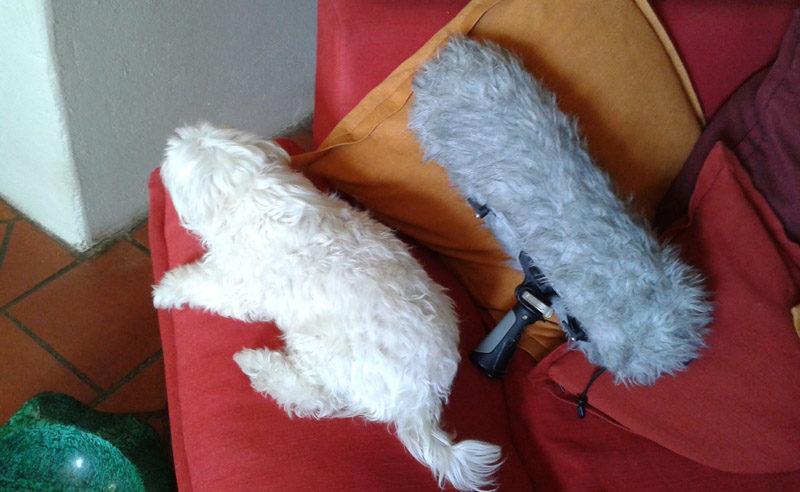 chien et micro
